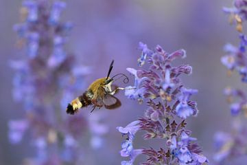 Fliegend Lila von A. Bles