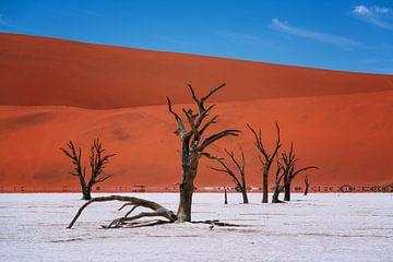 Deadvlei, Namibie sur