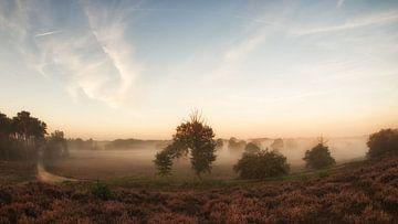 Nebel am Morgen von Lex Schulte