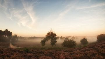 Brouillard le matin sur Lex Schulte
