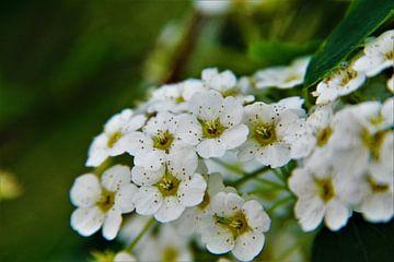 Bouquet naturel sur Marije Zwart