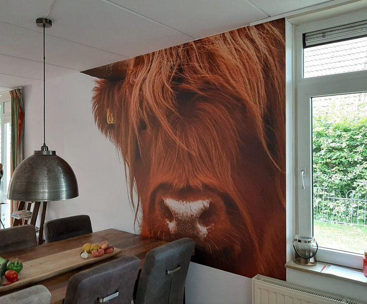Klantfoto: Portret Schotse Hooglander 2 van Sandra van Kampen, op naadloos behang
