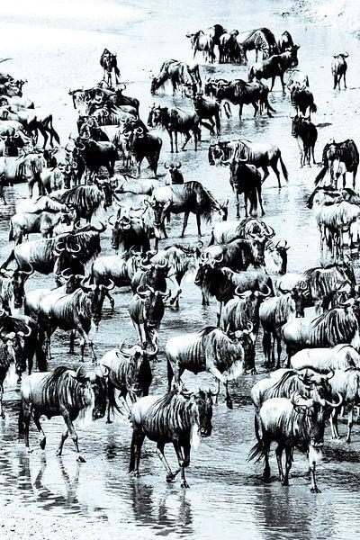 De grote trek - wildebeest van Sharing Wildlife