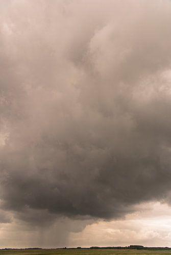 Regenbui over Het Zwin van