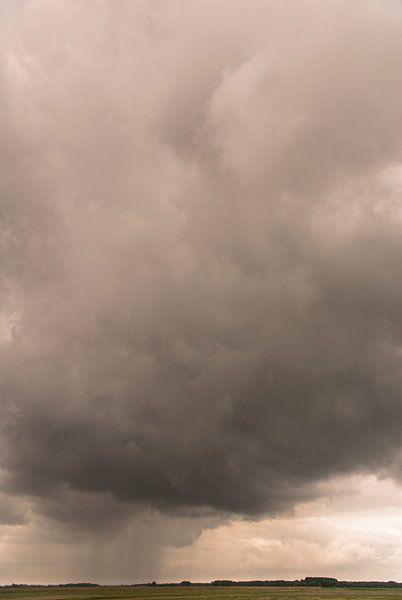 Regenbui over Het Zwin