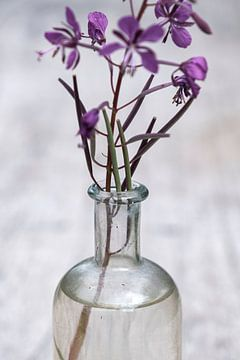 Die Schönheit von Unkraut in einer Flasche von Affect Fotografie