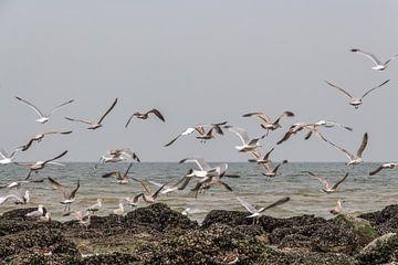 Fliegende Möwen am Strand von Ostende von didier de borle