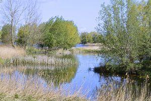 Fluss-Natur-Ansicht von Greta Lipman