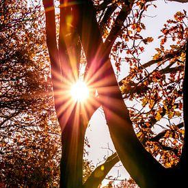 De zon als ster tussen de bomen van Fotografie Jeronimo