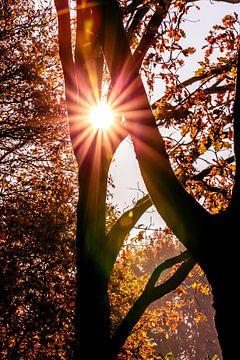 De zon als ster tussen de bomen