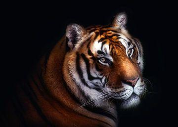 Tiger, Santiago Pascual Buye von 1x