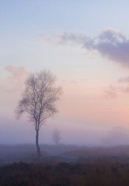 Mist van Joost Lagerweij