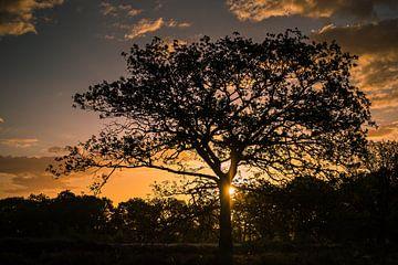Sunrise Baloërveld