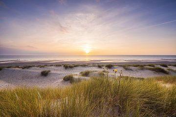 Dunes au bord de la mer
