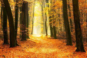 Pfad durch einen goldfarbenen Wald an einem schönen, sonnigen Herbsttag. von Sjoerd van der Wal