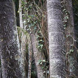 begroeide bomen op java van Karel Ham