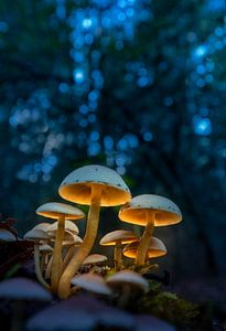 Verlichte paddenstoelen van