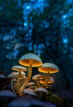 Verlichte paddenstoelen van Edward Sarkisian