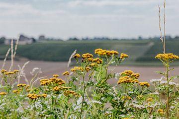 gelbe Blumen von Huib Vintges