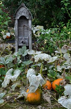 Pompoenen in de tuin van Susan Dekker