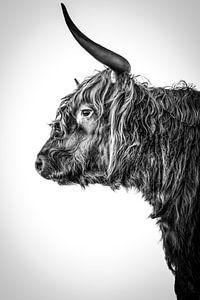 Schottischer Highlander Langhorn schwarz-weiß