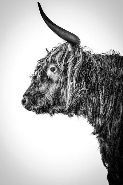 Schottischer Highlander Langhorn schwarz-weiß von John van den Heuvel