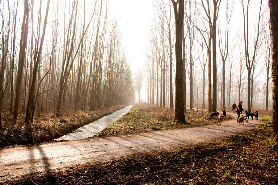 Forestlight van Koen Smit