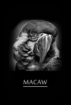 Macaw van Leopold Brix