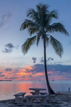 Palmboom tijdens de zonsondergang. van Erik de Rijk