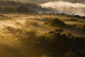 Mist landschap Hollands Duin van
