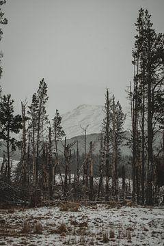 Dood bos in de Cairngorms van