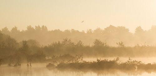 Nebel im polder (Utrecht) von Robert van Iperen