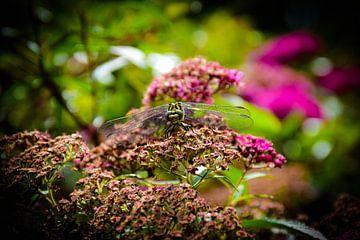 Libelle von Ingrid de Vos - Boom