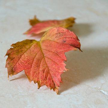 Herfst sur