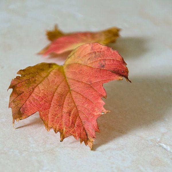 Herfst van Pierre Timmermans