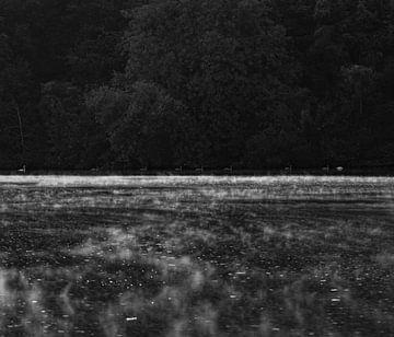 Zwanen op de Moesel met ochtendmist van Marjon Boerman