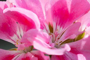 Der Frühling liegt in der Luft, der Garten bekommt Farbe von Studio de Waay