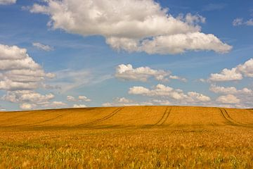 goldiger Sommer von Christian Buhtz