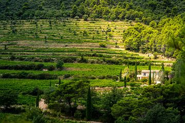 Huis in de wijngaard van Rob Bout