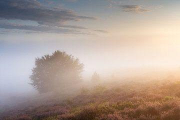 Misty Sunrise Posbank von Sander Grefte