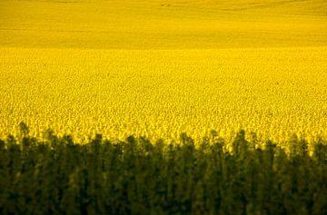 Landschaft im Mai von Thomas Jäger