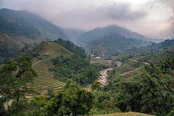 Reisfelder von jacky weckx