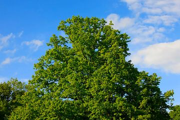 Prächtiger Baum