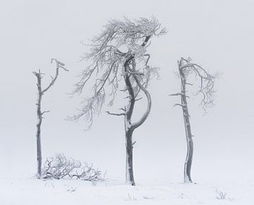 Minimalisme hivernal sur Joris Pannemans - Loris Photography