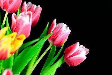 Tulpenblüte von Thomas Jäger