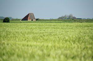 Typisch Texels