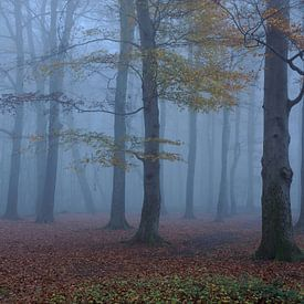 Le blues de novembre... sur wunderbare Erde