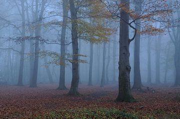 Novemberblues... Nebelstimmung im Herbstwald von wunderbare Erde