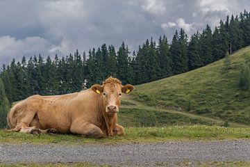 liggende koe in de bergen van Patrick Herzberg