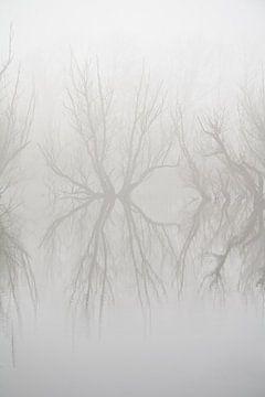 Reflectie in de mist. van Rens Kromhout